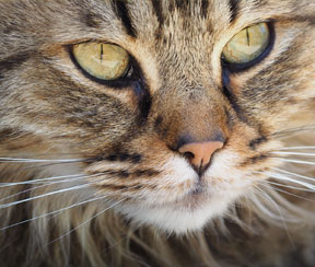 Kattenbenodigdheden