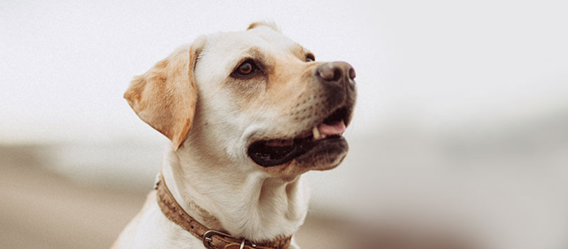 Honden benodigdheden
