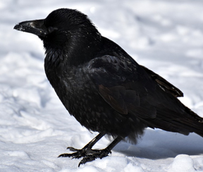 Vogelbenodigdheden