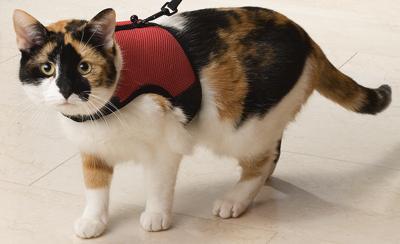 Ipts Katten Loopharnas Comfort