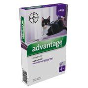 Bayer Advantage Kat 4 Pipetten 80 Vanaf 4 Kg